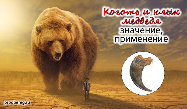 Клык медведя амулет